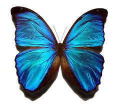 Ein blauer schoener schmetterling