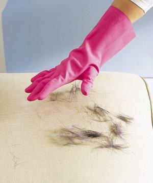 Befeuchteter Gummihandschuh um Hundeharre und Katzenhaare zu entfernen